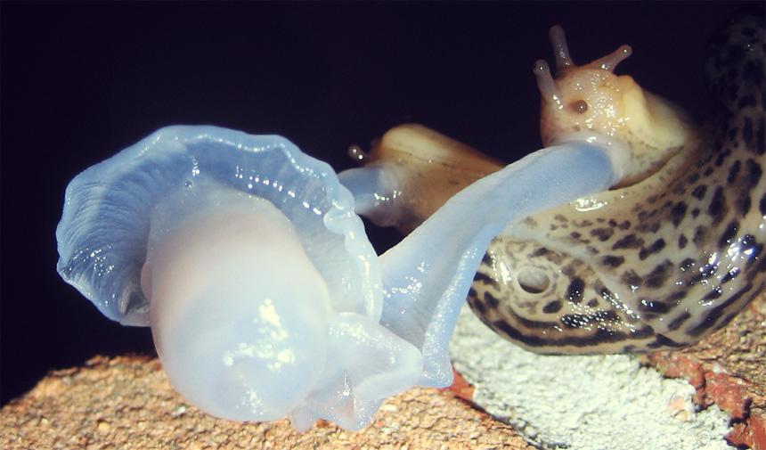 magic: slugs mating